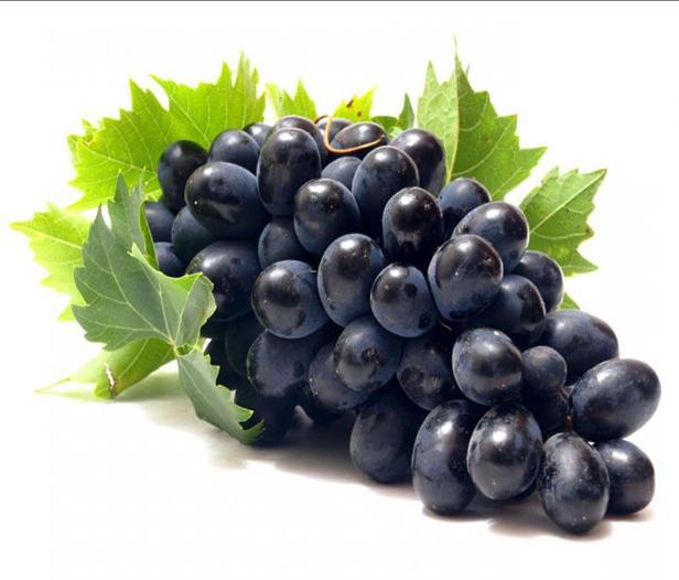 Фото - Северный виноград Беларуси