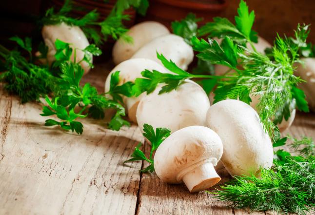 Фото - Производство грибов шампиньонов