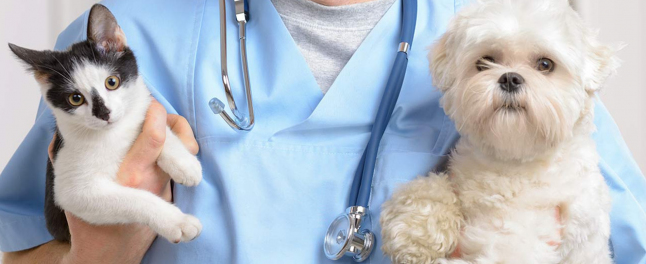 Фото - Ветеринарная клиника со стационаром,отделением реабилитации
