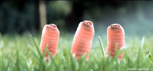Фото - Производство продовольственного сырья из насекомых.