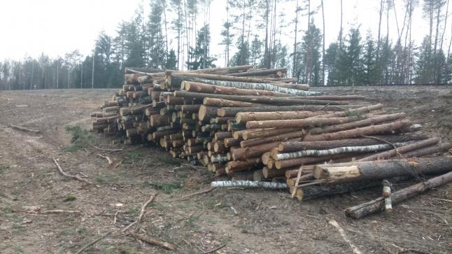 Фото - Лесозаготовка, деревообработка