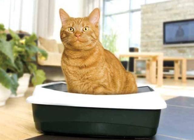 Фото - Производство наполнителей для кошачьего туалета
