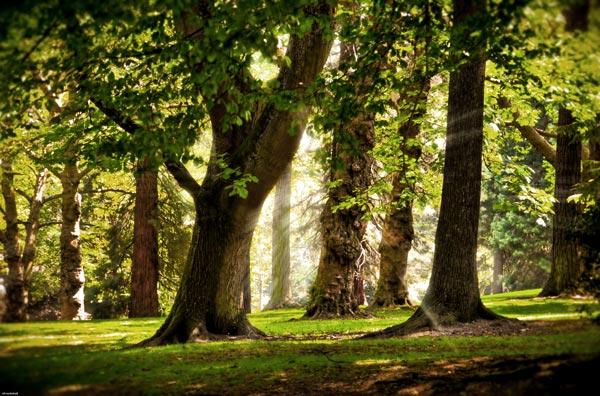 Фото - Расширение действующего деревообрабатывающего производства
