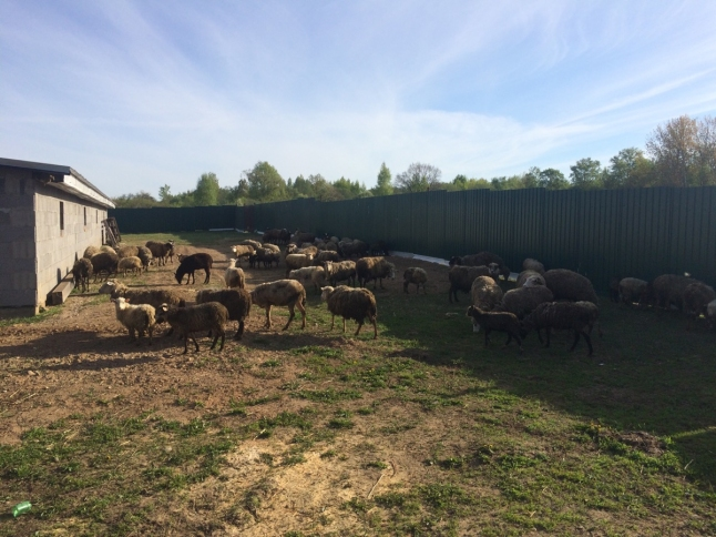 Фото - Ферма по выращиванию животных и птиц на натуральных кормах
