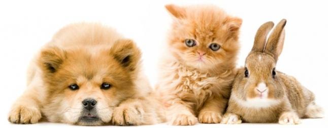 Фото - Услуги для домашних животных