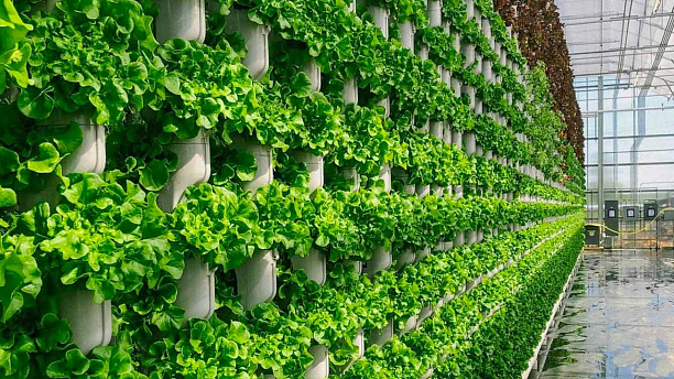 Green Farm — заявка поиска инвестиций на «startupnetwork.by»